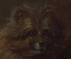 Arnolfini Mariage: dog closeup